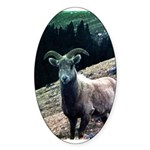 Mountain Sheep Sticker (Oval)