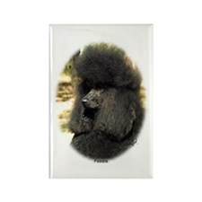 Poodle Standard 9F5D-02 Rectangle Magnet