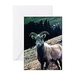 Mountain Sheep Greeting Card