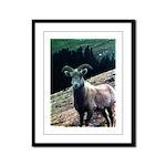 Mountain Sheep Framed Panel Print