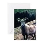 Mountain Sheep Greeting Cards (Pk of 10)