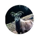 Mountain Sheep 3.5