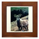 Mountain Sheep Framed Tile