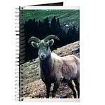 Mountain Sheep Journal