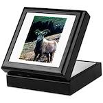 Mountain Sheep Keepsake Box