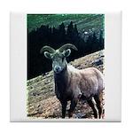 Mountain Sheep Tile Coaster
