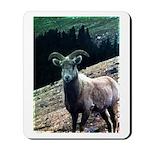 Mountain Sheep Mousepad