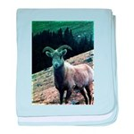 Mountain Sheep baby blanket
