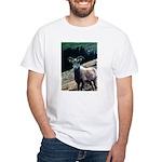 Mountain Sheep White T-Shirt