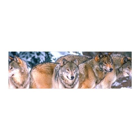 4 Wolves 42x14 Wall Peel