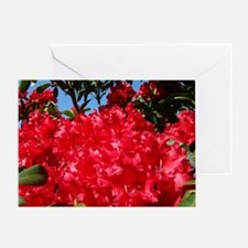 Rhodies Flowers Rhododendrons Greeting Card