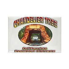 Chandelier Tree Rectangle Magnet