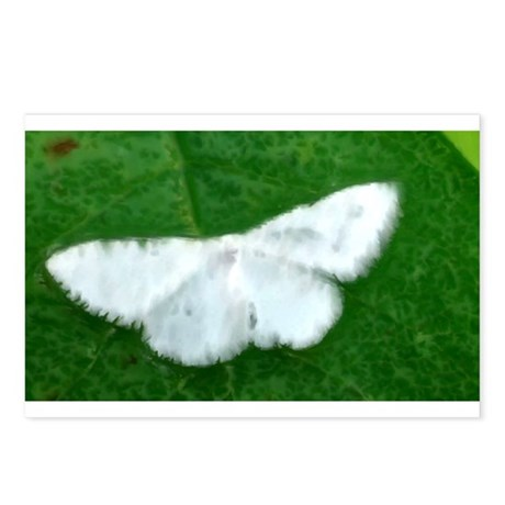 White Moth Postcards (Package of 8)