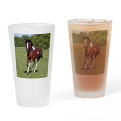 Pinto Foxtrotter Drinking Glass
