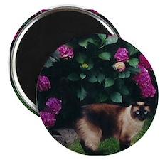 Cute Pet cats Magnet