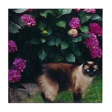 Funny Siamese cats Tile Coaster
