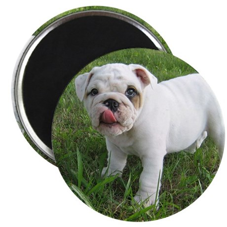 "Bulldogs 2.25"" Magnet (100 pack)"