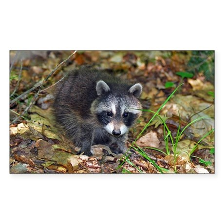 Baby Raccoon Sticker (Rectangle)