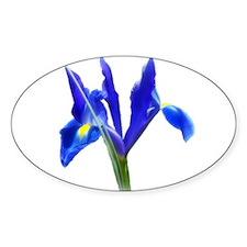 Blue Iris Decal