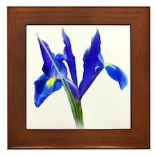 Blue Iris Framed Tile