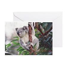 Koala Greeting Cards 2 (Pk of 10)