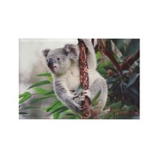Rectangle Koala Magnet 5