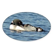 Loon preening Decal
