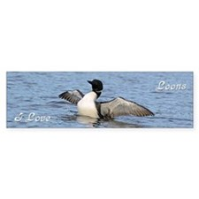 Common Loon Bumper Sticker