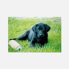 Black Lab Puppy Rectangle Magnet