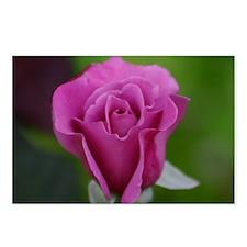 Lavender Rose - Postcards (Package of 8)