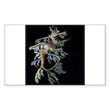 Leafy Seadragon with Mysid Decal