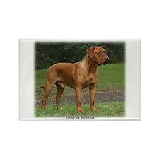 Dogue de Bordeaux 9Y201D-159 Rectangle Magnet