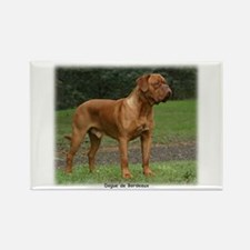 Dogue de Bordeaux 9Y201D-159 Rectangle Magnet (100