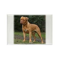 Dogue de Bordeaux 9Y201D-193 Rectangle Magnet
