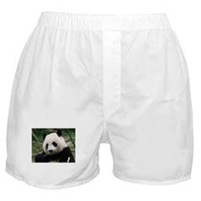 Cute Giant panda Boxer Shorts