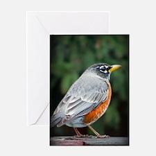 A Robin's Glare Greeting Card