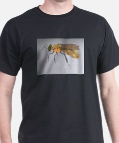 Bee of Glass T-Shirt