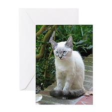Blue Eyed Kitten - Greeting Card