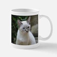 Blue Eyed Kitten - Mug