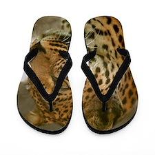 Amazon Cat Flip Flops