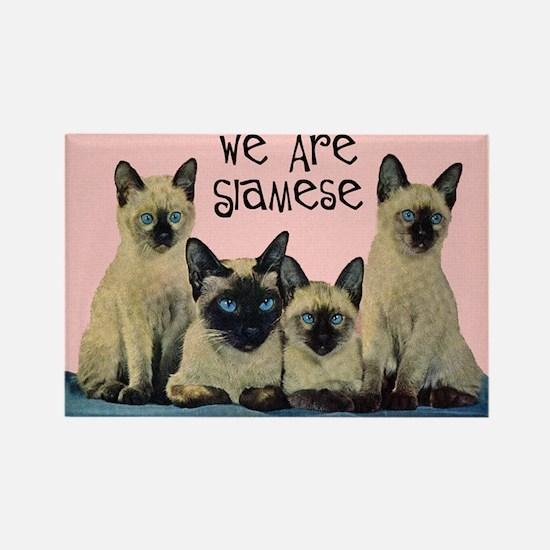 Siamese Cat Rectangle Magnet