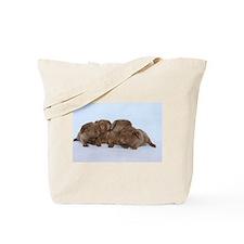 Beige Tan Guinea Pig Babies Tote Bag