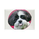 Funny Shih Tzu Rectangle Magnet (100 pack)