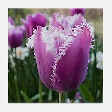 Purple Tulip Tile Coaster
