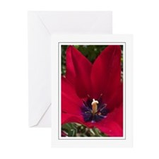 Red Tulip Greeting Cards (Pk of 10)