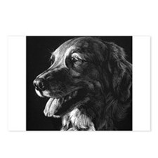 Dramatic Golden Retriever Postcards (Package of 8)