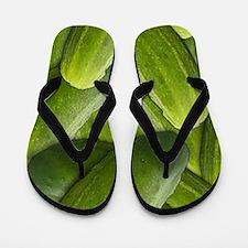 Pickles Flip Flops