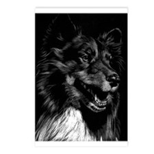 Dramatic Shetland Sheepdog Postcards (Package of 8
