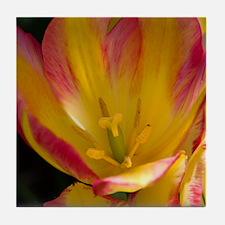 Red & Yellow Tulip Tile Coaster