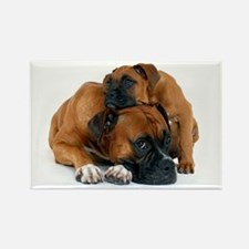 Boxer 3 Rectangle Magnet (10 pack)